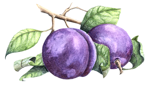 tube prune
