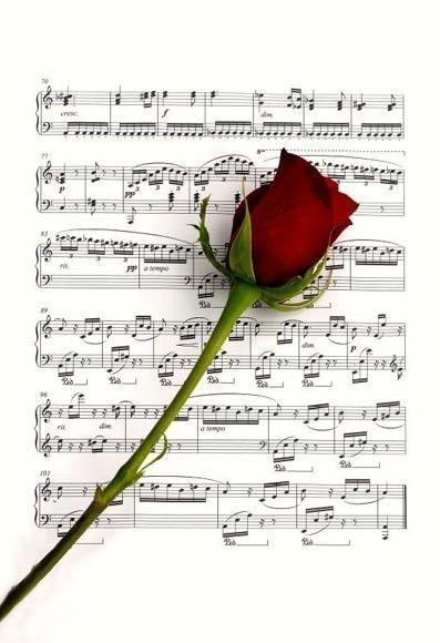 gif partition et rose