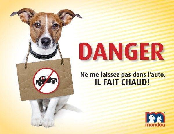 canicule : ne Laissez pas votre animal  dans la voiture