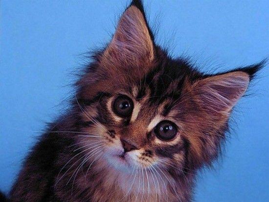 Gifs chat et fond d ecran page 29 - Faites le moi savoir ...