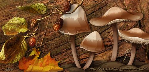 bannière vierge champignon