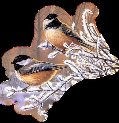 Résultat d'images pour Gifs hiver oiseaux