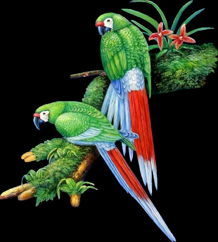 gif perroquet