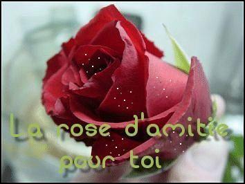 la rose d'amitié