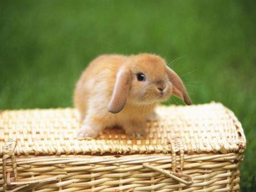 trop chou ce petit lapin